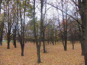 leaves0.jpg